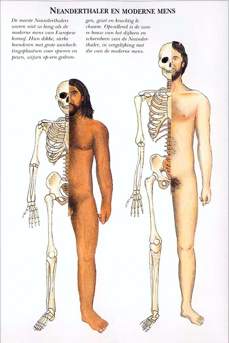 neanderthalermodernemens
