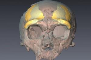 nl-neanderthaler