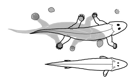 earliest-tetrapod-footpri-001